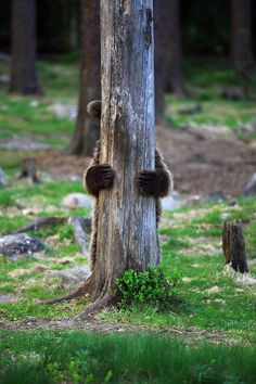 Playing hide & seek ??? PHOTO - Valtteri Mulkahainen