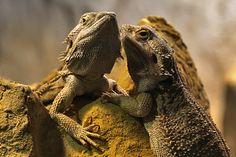 Tierische Sommerloch-Geschichten | Kuriose Tierwelt