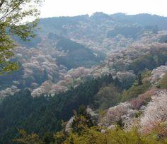 吉野山 旅の専門家が選ぶ!今年こそ見たい桜&お花見名所まとめ2014 | [たびねす] by Travel.jp