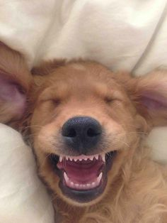 funny pictures of dogs...*Click to see more and links to other funny photos.