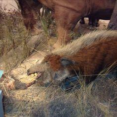 Horses, Photography, Animals, Photograph, Animales, Animaux, Horse, Photo Shoot, Animal