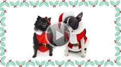 Dogs in Christmas costumes take on humans in Christmas costumes for the title of best dressed!