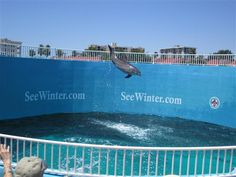 what to do in clearwater florida | What To Do In Clearwater, Florida