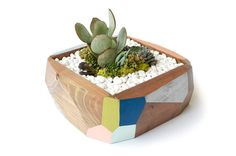 Geometric Planter / No. 5