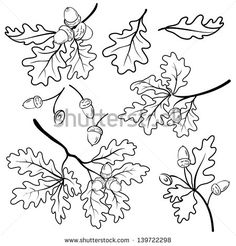 Set oak branches with leaves and acorns, black contour on white background. Vector