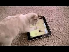 Funny George the cat  try to catch a mouse from an IPad. Funny kitten.