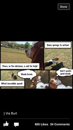 Why basset hounds make bad guard dogs.