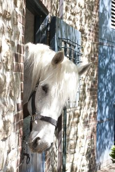 Welcome to my world of lovely things. Dreaming of heaven, dancing in a summer meadow with white horses. All The Pretty Horses, Beautiful Horses, Animals Beautiful, Hello Beautiful, Farm Animals, Cute Animals, Majestic Horse, All About Horses, Mundo Animal