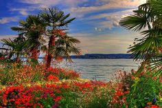Sommer am Bodensee - Summer at the Lake of Constanze