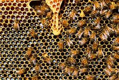 The Importance of Hiring Bee Removal Companies