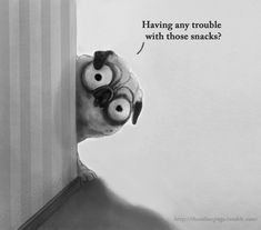 Sharing your troubles like a true hero. ... - Pugs