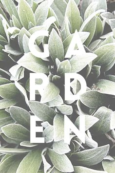 In_The_Garden_01