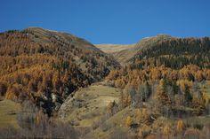 Schweiz  Wallis Goms Herbst Berge Alpen Lärche