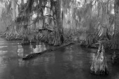 """South Louisiana Swamp  """"At the end of the passable road they alighted, and for miles splashed on in silence through the terrible cypress woods where day never came. Ugly roots and malignant hanging nooses of Spanish moss beset them, and now and then a pile of dank stones or fragment of rotting wall intensified by its hint of morbid habitation a depression which every malformed tree and every fungous islet combined to create.""""  - The Call of Cthulhu"""