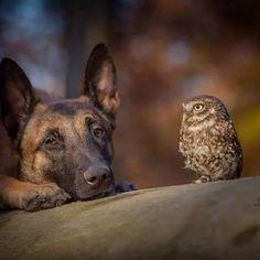 Therapist Owl...