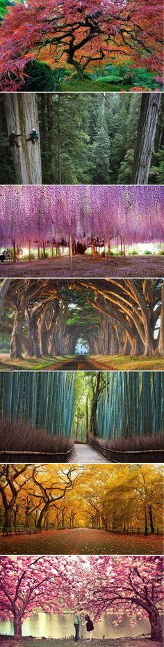 Die wohl schönsten Bäume der Welt - Win Bild   Webfail - Fail Bilder und Fail Videos