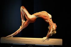 Gunther von Hagens.  Saw an older exhibit in '05.  Amazing.