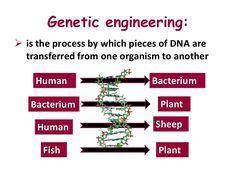 a overview of the development of the genetic engineering Although there are many diverse and complex techniques involved in genetic engineering, its basic principles are reasonably simple there are five major steps in the development of a there are five major steps in the development of a.