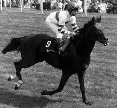 Sir Harry Lewis(1984)(Colt) Alleged- Sue Babe By Mr Prospector. 4(C)x 4(C) To War Admiral, 4(F)x4(F) To Native Dancer, 5x5 To Count Fleet. 17 Starts 9 Wins 4 Seconds 3 Thirds. $767,503. Won Irish Derby(Ire-1), Dee S(Eng-3), 2nd John Porter S(Eng-3), 3rd Rothmans Intl(G1), Matchmaker Intl(Eng-1), Ormonde E.B.F. S(Eng-3).