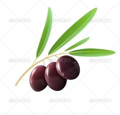 Three Black Olives  #GraphicRiver         Vector illustration of detailed black olives with leaves on white background.   Package contains: EPS (10 version), JPG ( 5436×5283 pixels, RGB ) 100% Vector – Changeable to any size     Created: 16November12 GraphicsFilesIncluded: JPGImage #VectorEPS Layered: No MinimumAdobeCSVersion: CS Tags: art #berry #black #branch #color #cuisine #design #eating #food #fruit #graphic #healthy #illustration #ingredient #leaf #lifestyle #mediterranean #nature…