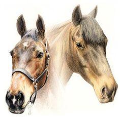 plaatje van een paard