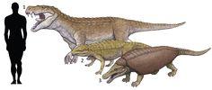 1.Baurusuchus albertoi 2.Notosuchus terrestris 3.Armadillosuchus arrudai