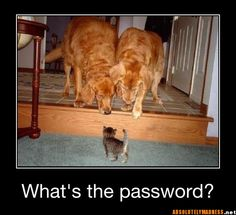 Funny dog and cat pics. A selection of funny and cute dog and cat images showing the funny and cute side of dogs and cats together. Cute Baby Animals, Funny Animals, Animal Babies, Farm Animals, Fur Babies, Funny Animal Pictures, Animal Pics, Funny Photos, Humorous Pictures
