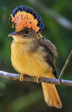 Exotic pets 534872893248248327 - Source by karinedesender Kinds Of Birds, All Birds, Cute Birds, Pretty Birds, Little Birds, Beautiful Birds, Animals Beautiful, Cute Animals, Weird Birds