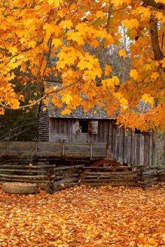 Aww I love the leaves