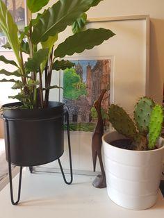 Een hoekje uit mijn huidige kamer. We maken het huis graag ook binnen gezellig met groen! Planter Pots, Plant Pots