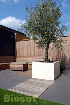 Grote witte bak met olijfboom #tuinontwerpen #bakmetolijfboom ontwerp en uitvoering www.biesot.nl