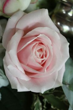 Flower Design Events: Sweet Avalanche Rose