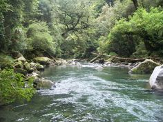 First fly fishing trip in New Zealand on the Tauranga-Taupo River