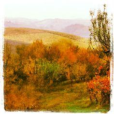 Monferrato vestito d'autunno