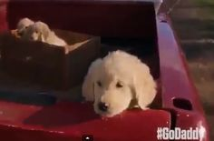 #GoDaddyPuppy Wins Super Bowl Ad Awareness War Four Days Before Kickoff