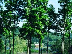 Baelie ridge Live, Plants, House, Home, Plant, Homes, Planets, Houses