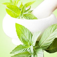 Peppermint Fragrance Oil by Natures Garden Scents is the herbal aroma of fresh cool peppermint. You will adore this crisp wholesale aroma. Wholesale Fragrance Oils, Dinner Mints, Vegan Deodorant, All Natural Deodorant, Candle Making Supplies, Soap Supplies, Soap Colorants, Green Soap, Aroma Beads