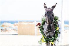 Mykonos wedding donkey