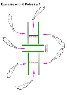 ch Online Training – Exercise with 6 Poles – horsephysio.ch Online T… horsephysio.ch Online Training – Exercise with 6 Poles – horsephysio.ch Online Training - Art Of Equitation Horse Riding Tips, Horse Tips, Trail Riding, Horse Riding Quotes, Horsemanship Patterns, Horse Arena, Horse Exercises, Horse Training, Training Tips