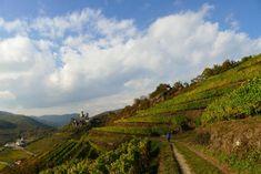 Weinwandern- Die schönsten Weinwanderungen in Österreich Vineyard, Vienna, Walking, Outdoor, Beautiful Landscapes, Tours, Hiking, Wine, Nature