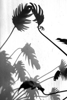 black and white photography of plants Tropical, Inspire Me Home Decor, Shadow Play, Foto Art, Yin Yang, Belle Photo, Black And White Photography, Light And Shadow Photography, Light In The Dark