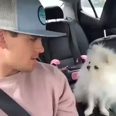 Love a guy that can love tiny, cute dogs. It's a cutie with its little tiny voice. Cute Funny Animals, Cute Baby Animals, Funny Cute, Funny Dogs, Animals And Pets, Pomeranian Haircut, Pomeranian Puppy, Chihuahua, Cute Puppies