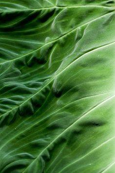 Green | Grün | Verde | Grøn | Groen | Colour | Texture | Style | Form | Pattern |