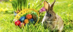 Huevos y conejos-los týpicos de la Pascua