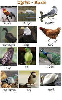Posting a wall paper on birds . In Kannada, Telugu, Names Of Birds, Kannada Language, Horse Mask, Download Free Movies Online, English Exercises, Upcoming Movies, Our Kids