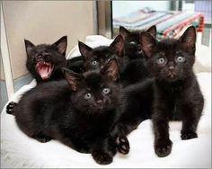 Cats of Google - Community - Google