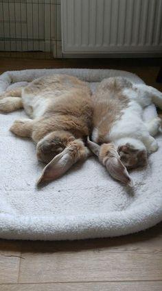 Snoozing buddies