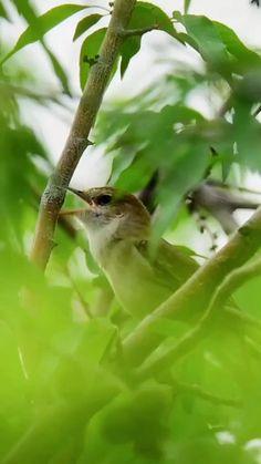 Beautiful Photos Of Nature, Beautiful Nature Wallpaper, Beautiful Places To Travel, Nature Pictures, Amazing Nature, Good Morning Beautiful Gif, Good Morning Flowers Gif, Pretty Birds, Beautiful Birds