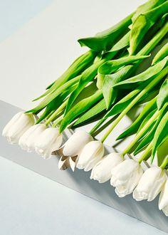 Tulips White | Sarah Otley