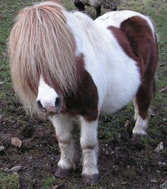 What a cute pony!!! Love the forelock!
